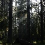 Lesní idylka