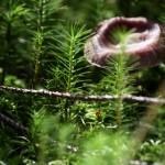 Lesní detail